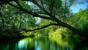 Amazon rainforest-more than 350 species found