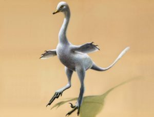 Duck like Dinosaurs Species found