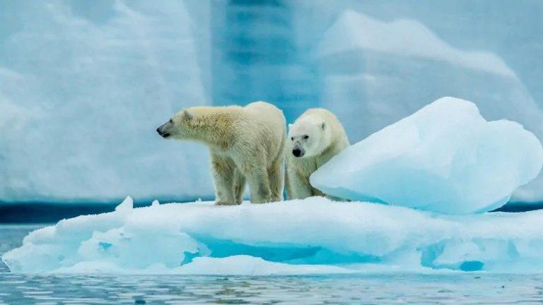 Deadly Polar Bear