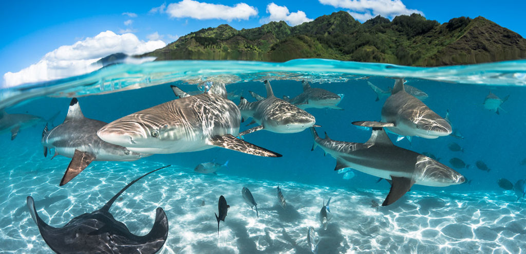 Bora Bora-The most beautiful destination on Earth