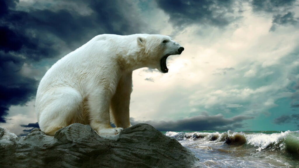 Why polar bears are eating & killing one another?